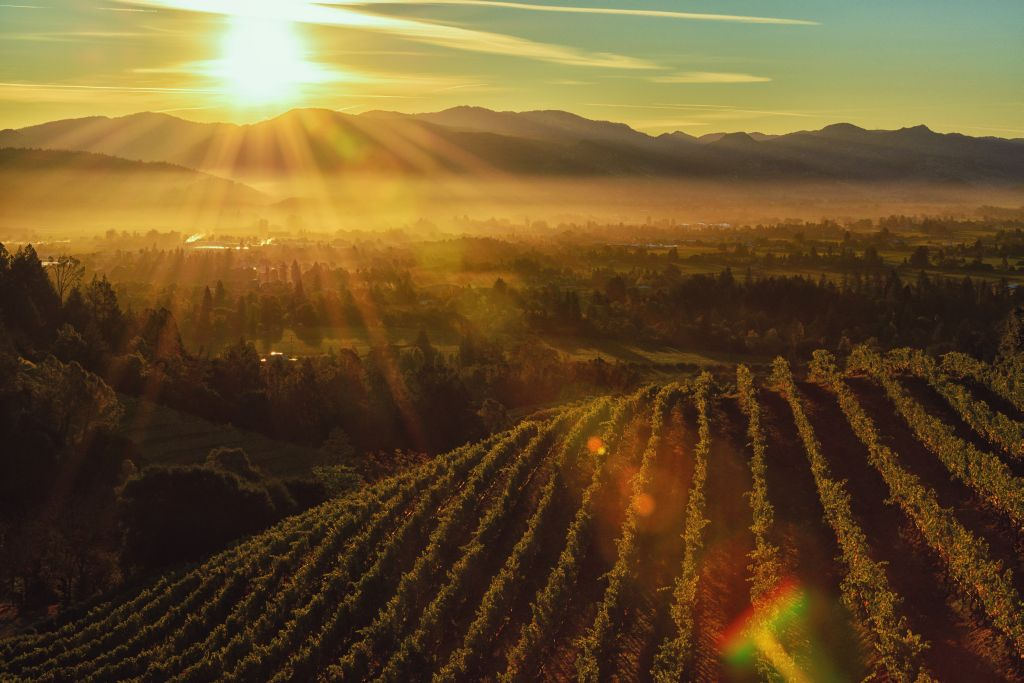 10 best California wine regions - Ecophiles