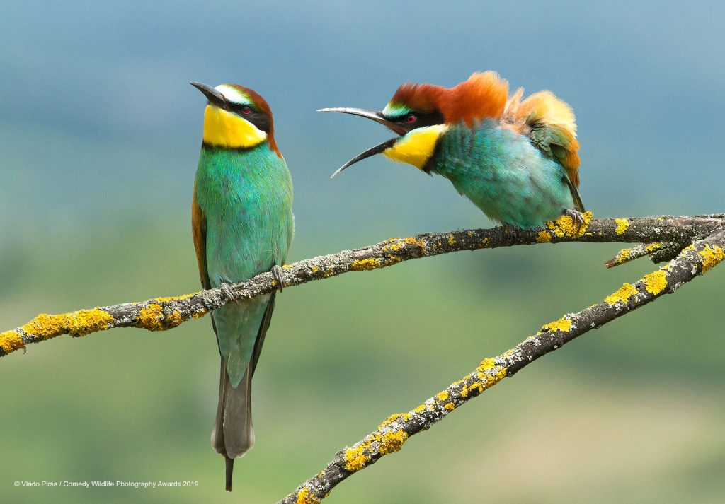 two birds The Comedy Wildlife Photography Awards 2019