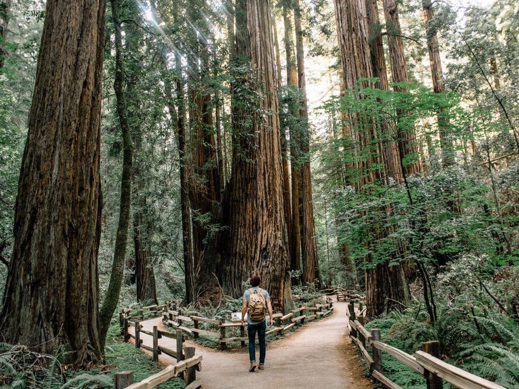 Muir Woods tour, California