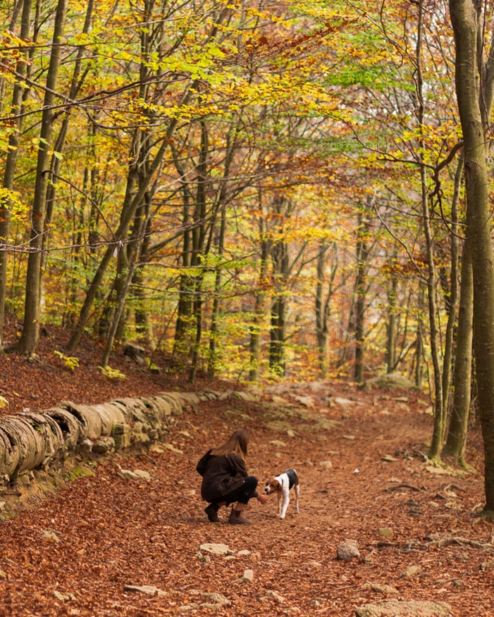 Hunting in Woods with Dog