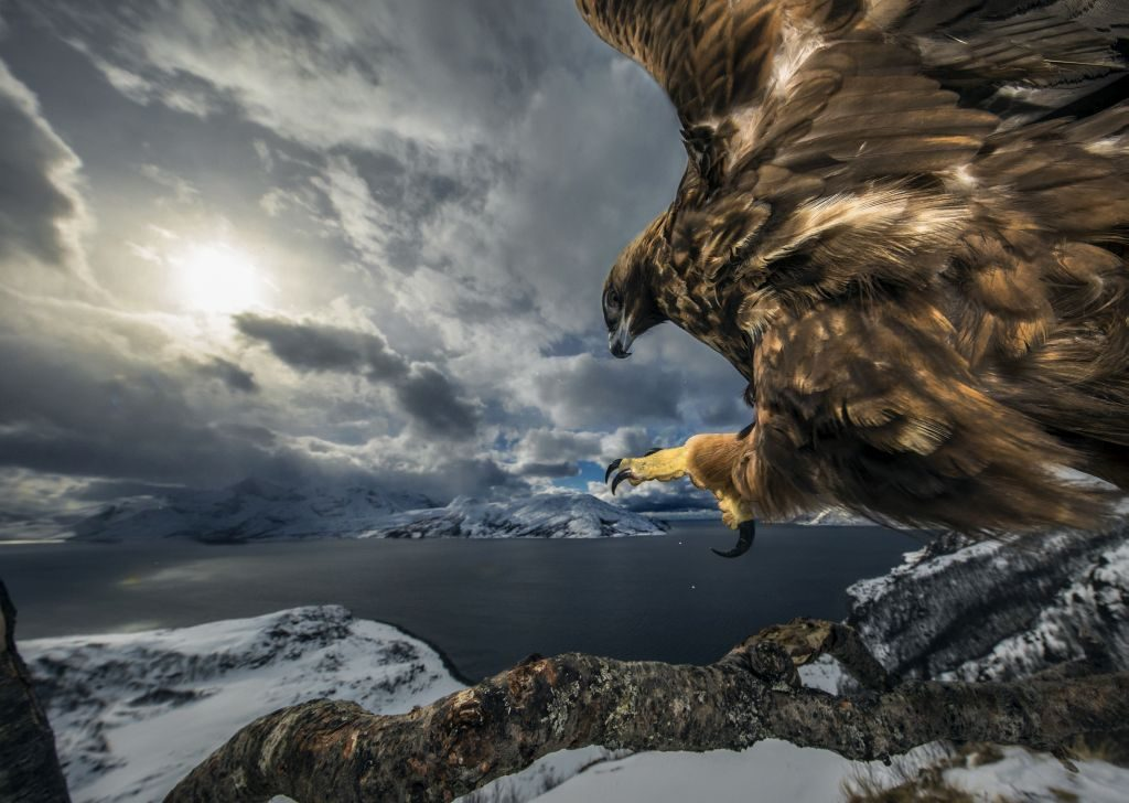 birds Nature Photographer of the Year 2019