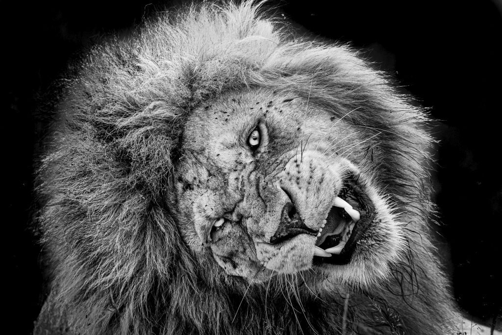 lion tanzania Nature Photographer of the Year 2019