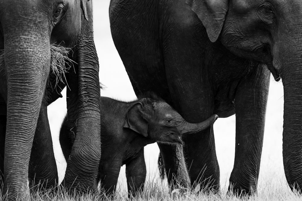 Nature Photographer of the Year 2019 elephants