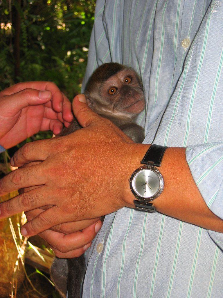 Borneo Wildlife Preserve