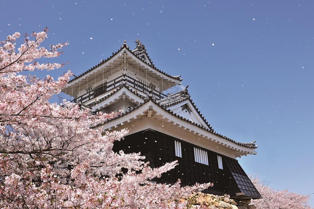 Hamamatsu Castle with Cherry blossoms (Hamamatsu City) Photo provided by Shizuoka Prefectural Tourist Association