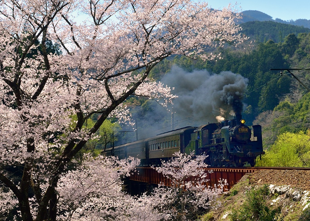 Oigawa Railway spring japan