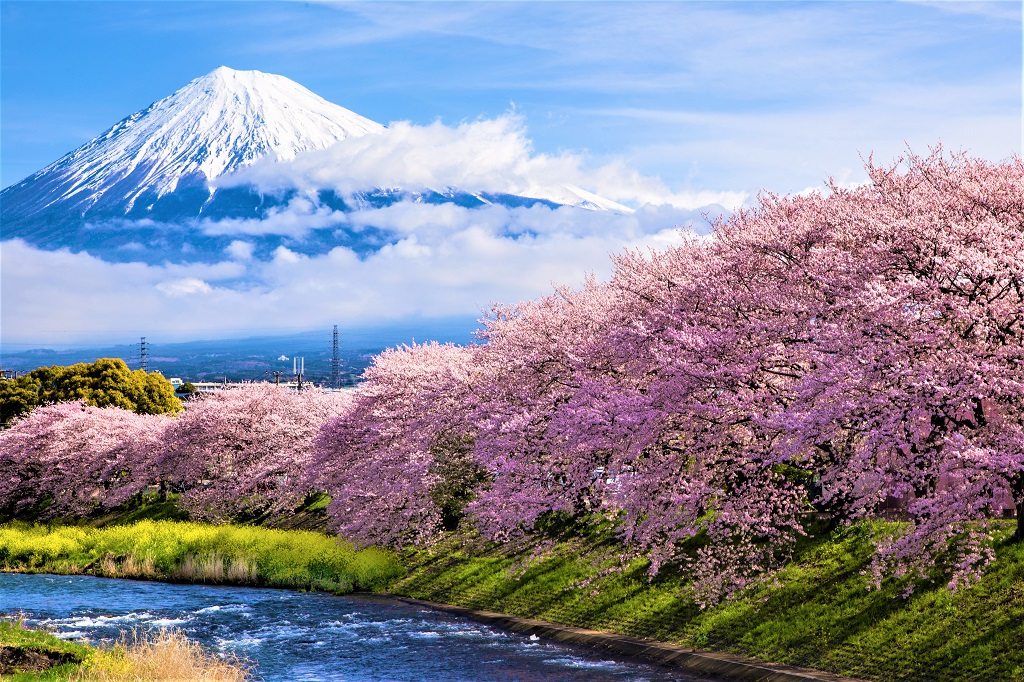 Where to Spot Some of Japan's Earliest Cherry Blossoms - Ecophiles