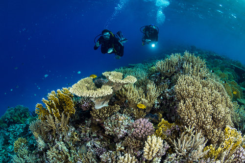 12 Ways You Can Help Protect Coral Reefs