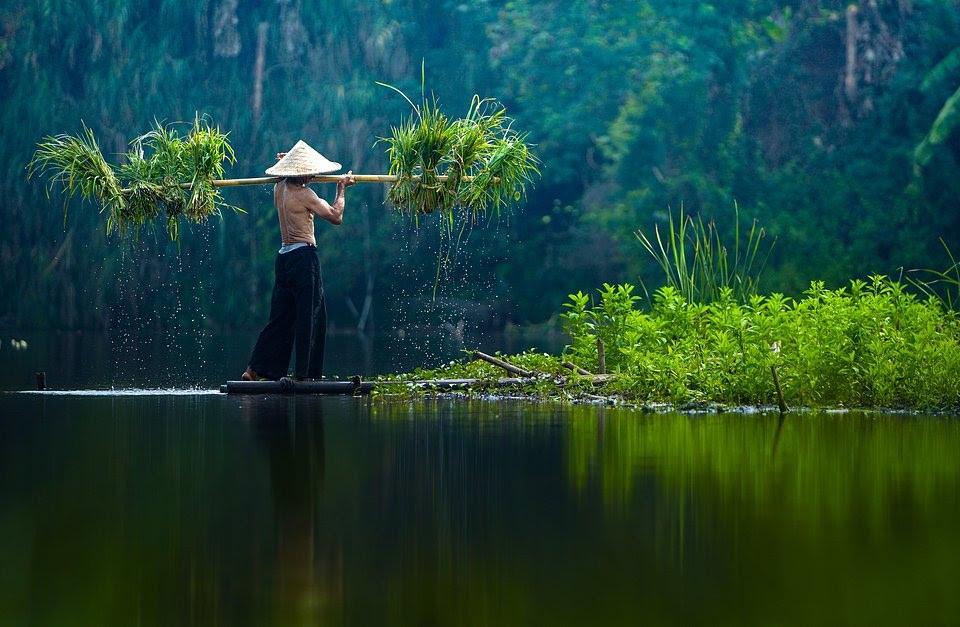farmer vietnam