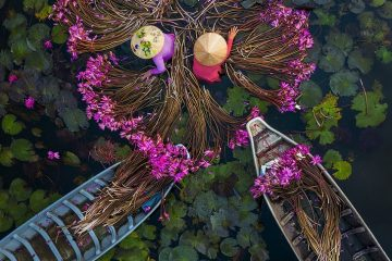 water lilies vietnam best photos of people at work