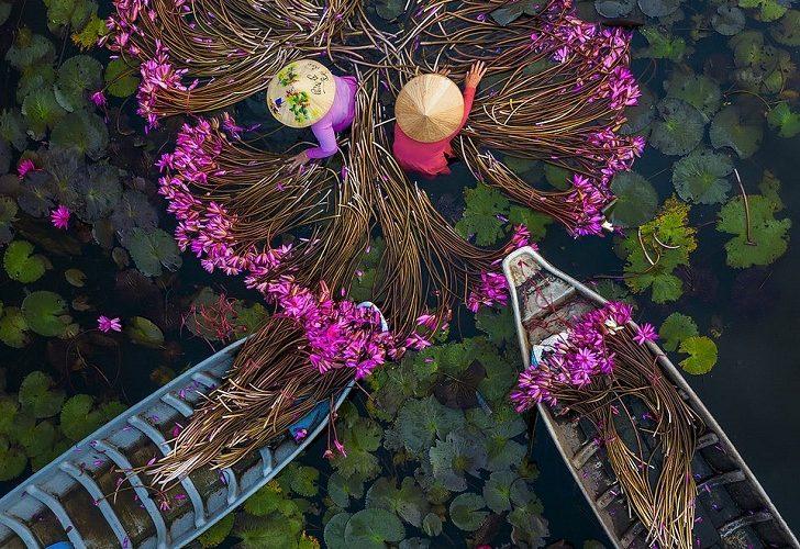 water lilies vietnam best photos of people at work