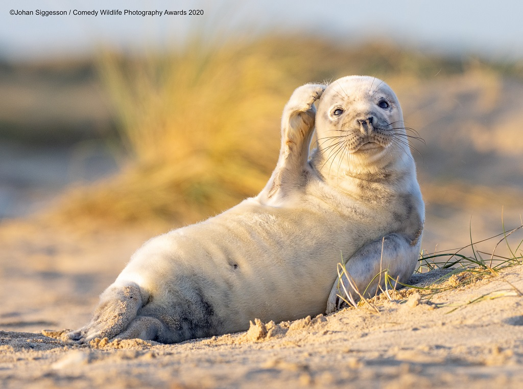 Winterton on Sea, UK seal