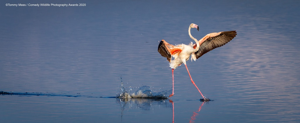 Comedy Wildlife Photography Awards 2020 flamingos Lake Magadi Serengeti Lake Magadi, Serengeti, Tanzania